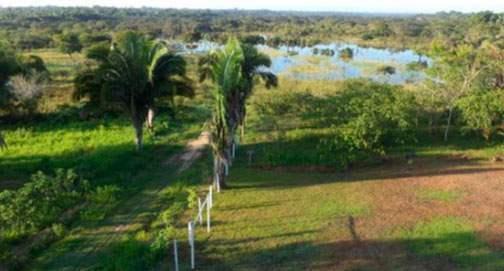 Estación Experimental UAP – Masisea, mostrando, palmeras shebon y shapaja, el campo deportivo, cultivo de camu-camu y el lago Juanacha.
